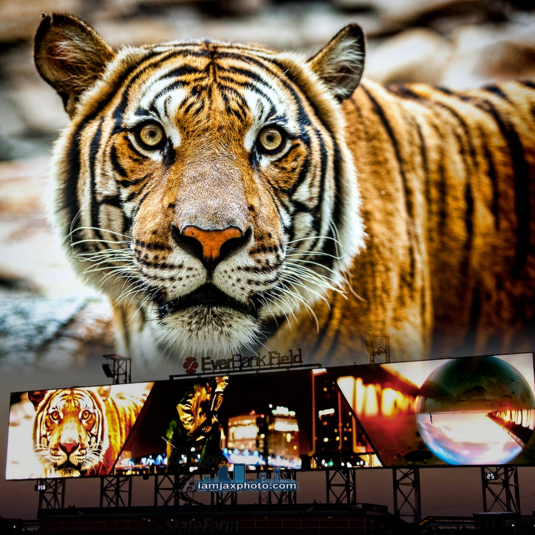 Featured image on EverBank Field Display
